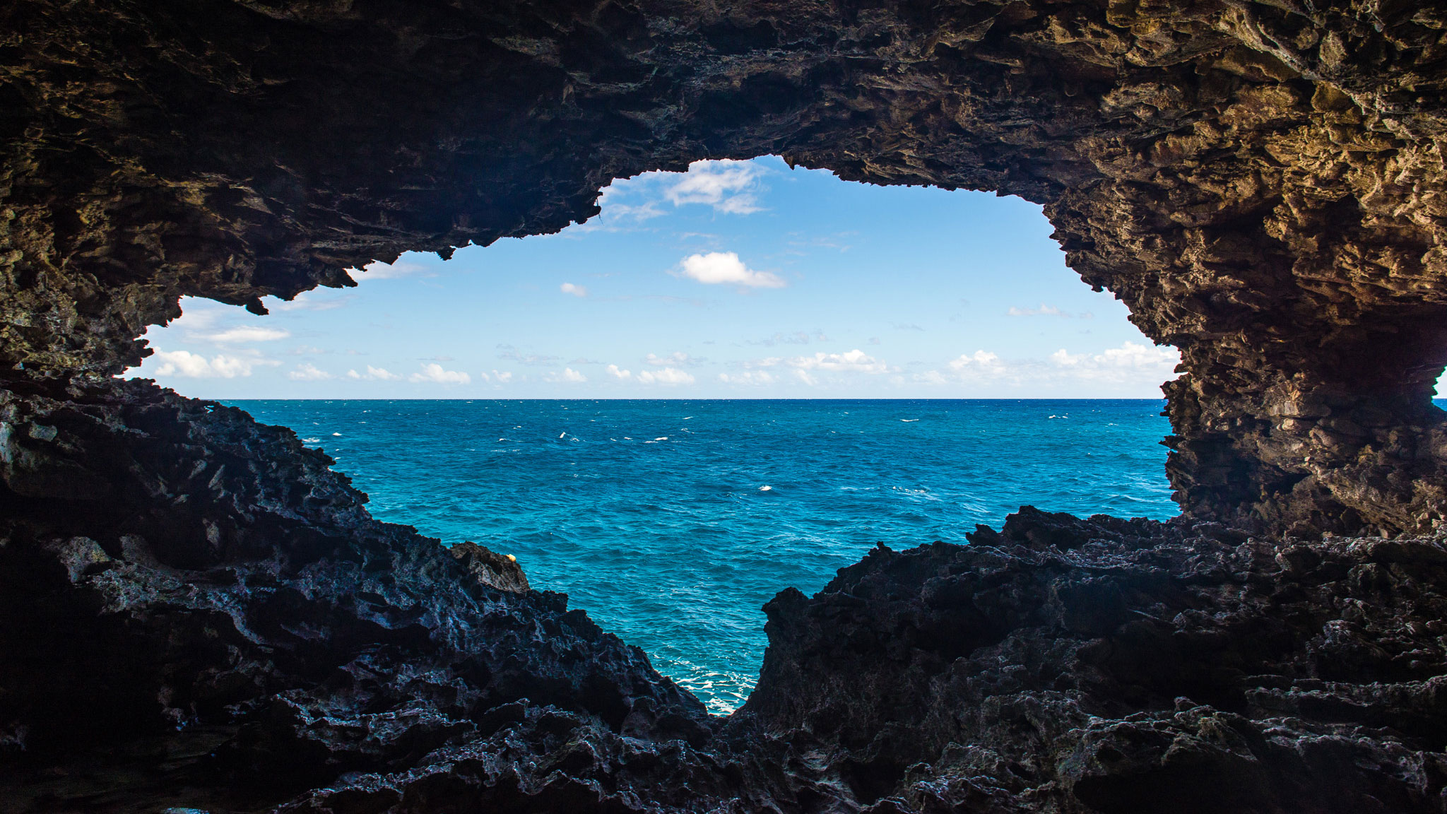 Animal-Flower-Cave-Barbados1