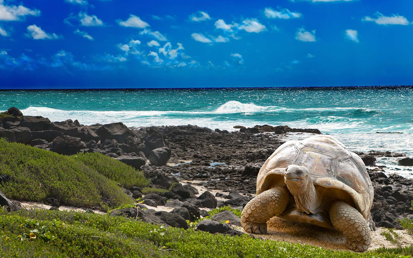 Large turtle  at  sea edge on background of tropical landscape